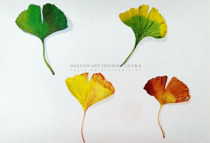 美深画室线上水彩课 | 秋的风物诗「上」银杏叶的春夏秋冬